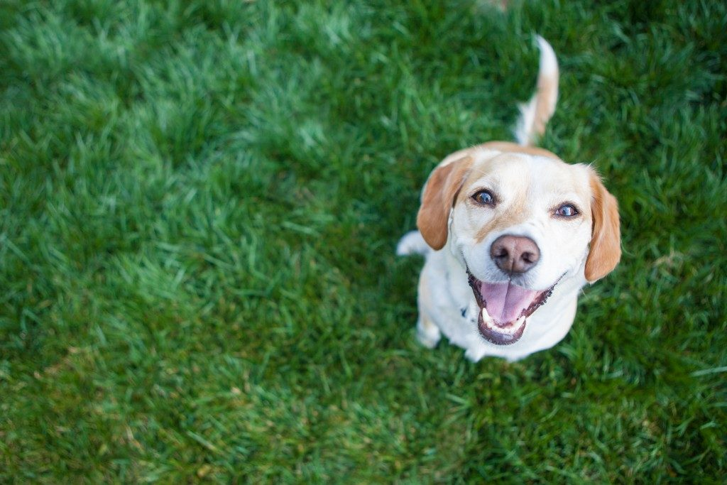 Dog smiling while playing in the garden