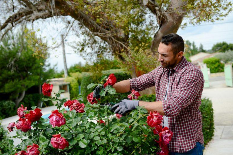 Gardener taking care of the flowers