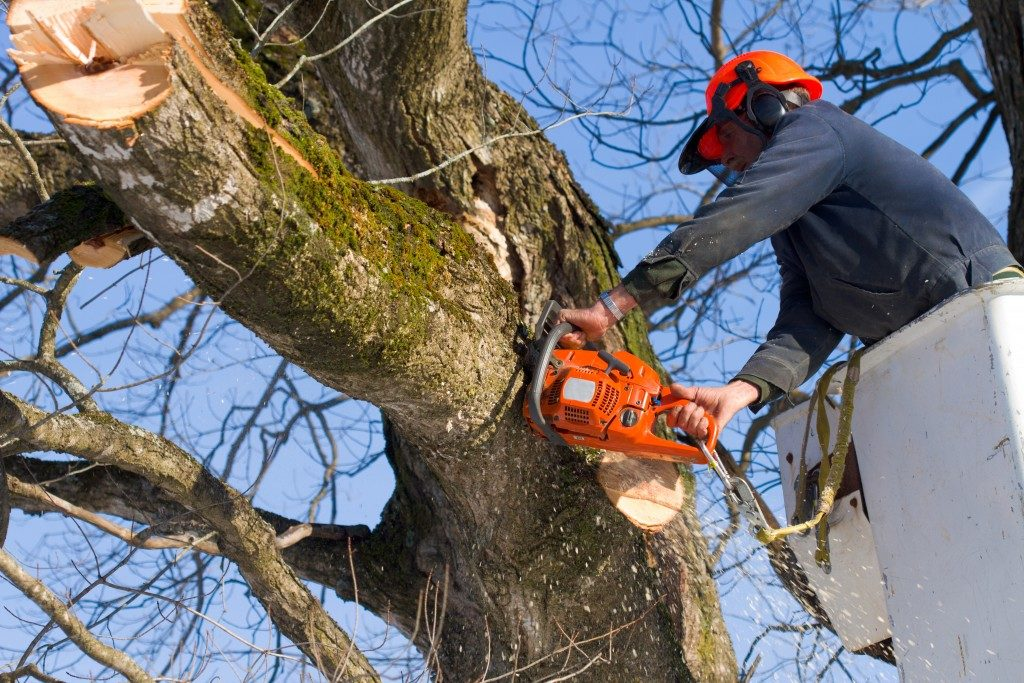 Worker trimming a tree