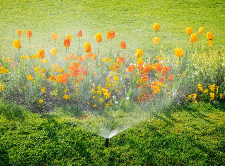 water sprinkler spraying plants
