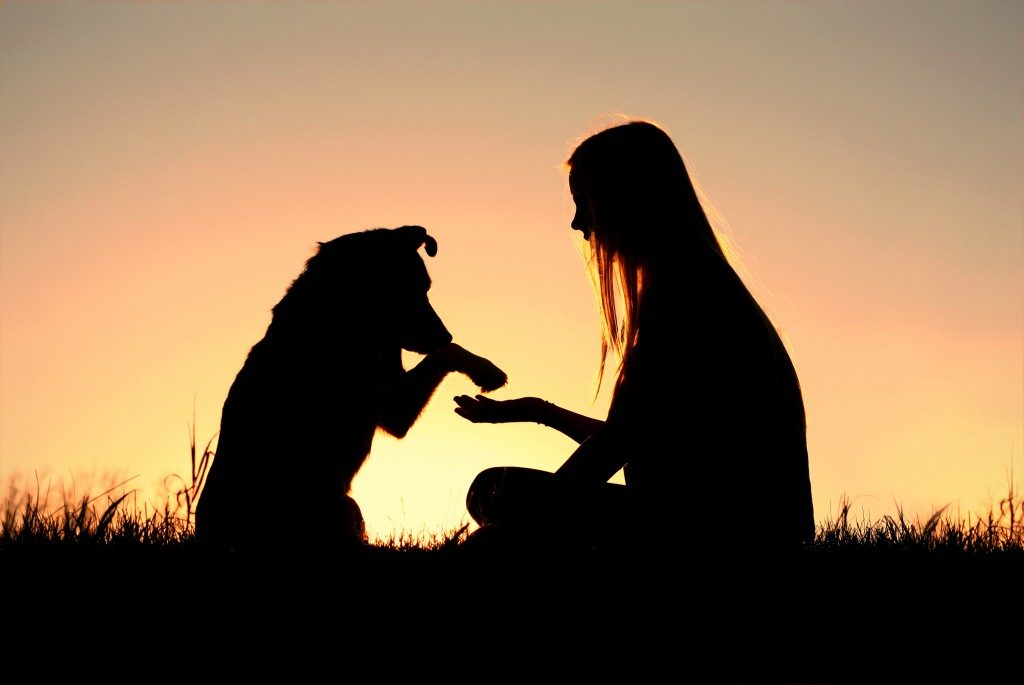 a girl is sitting outside in the grass, lovingly shaking hands with her German Shepherd dog
