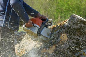 Worker cutting the fallen tree