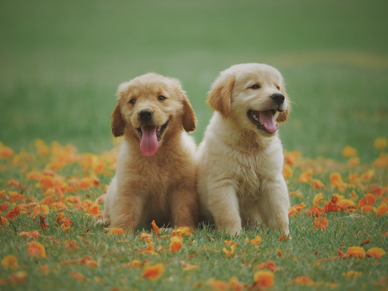 two puppies on the grass