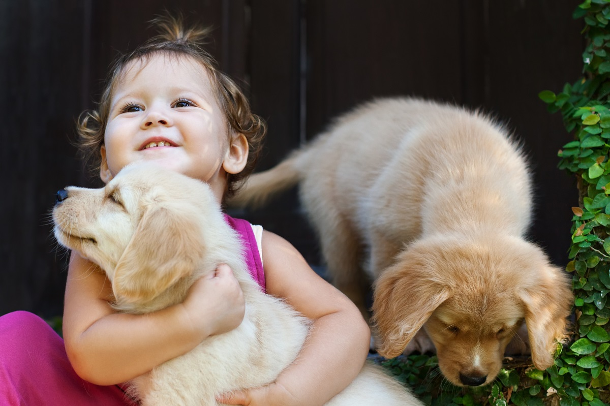 kid with dogs