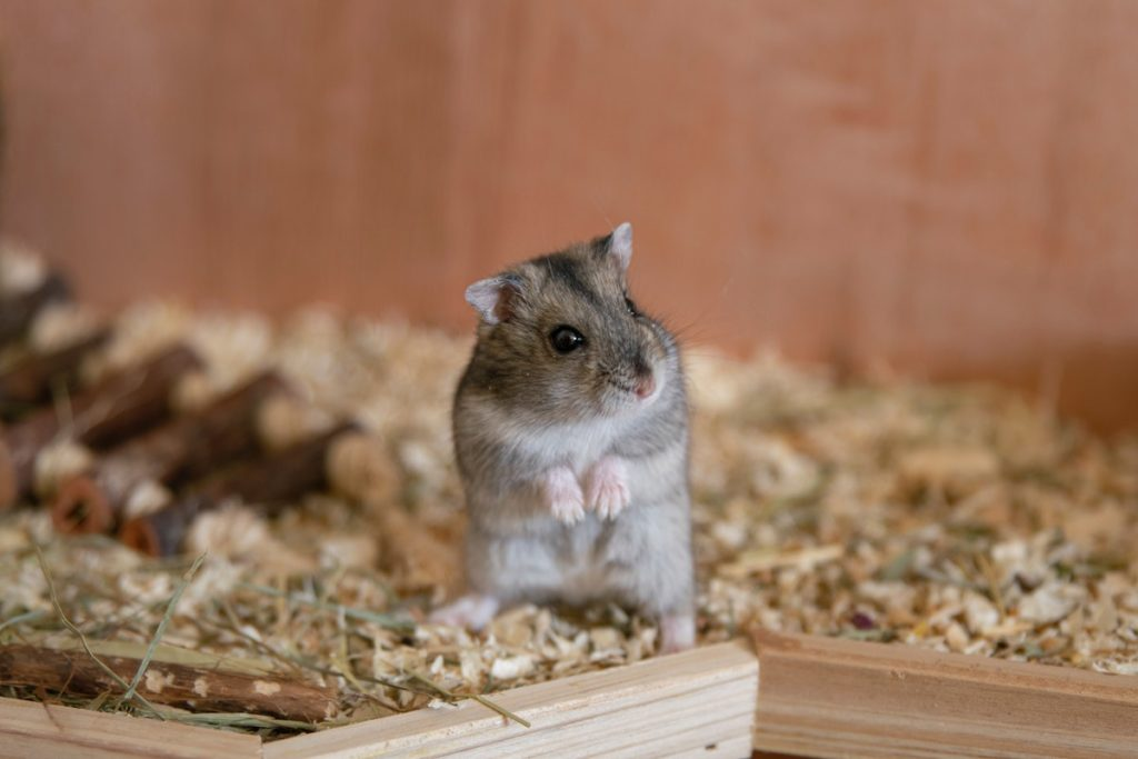 hamster inside a container