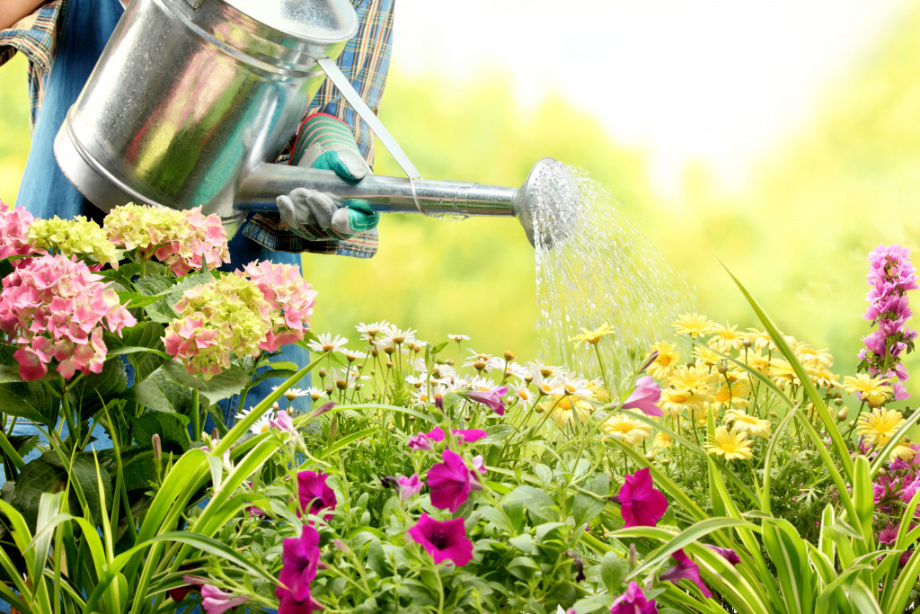 person watering plants
